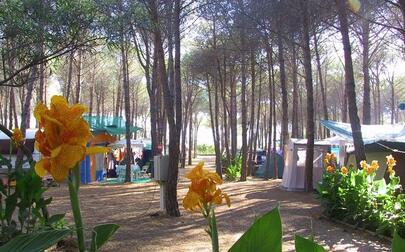 Camping Selema