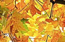 Die Schönheit des Herbstes am Gardasee